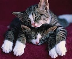 The Cuddle-Sutra: 7 Common Sleeping Styles