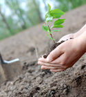 EdenGivesBack: Get Tree Happy for Earth Day  #1toy1tree