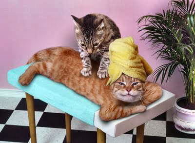 Time for a relaxing massage! I survived Wendsday!