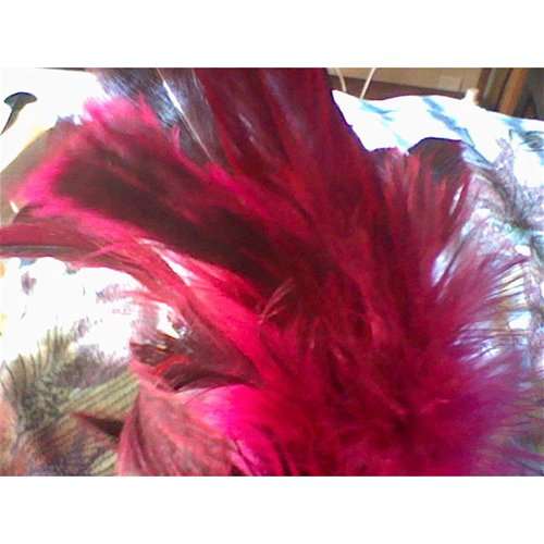 Starburst fantasy feather – tickler in Rose