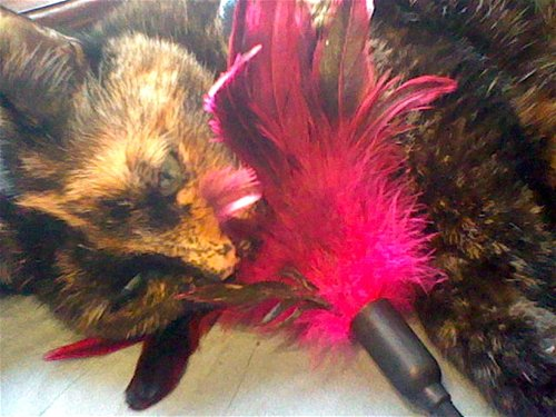 Starburst fantasy feather – tickler (Rose)