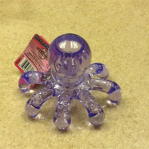 Cute little Octopus