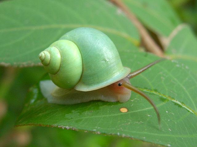cutie bug