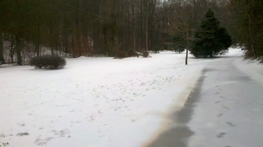 My front yard.