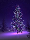 Oh Christmas Tree, Oh Christmas Tree... Oh! Christmas Tree!