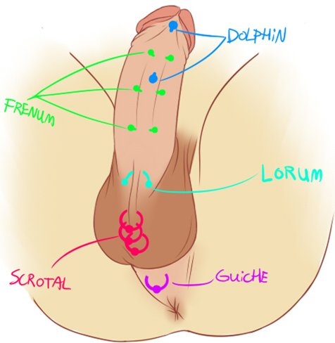 male piercing diagram 2